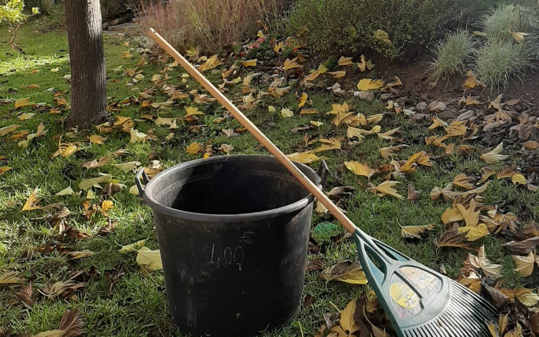 Nettoyage automnal
