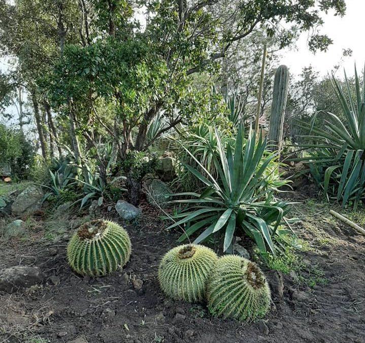 Chantier insulaire & plantation de cactus